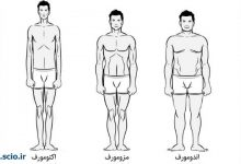 Photo of انواع تیپ های بدن در بدنسازی